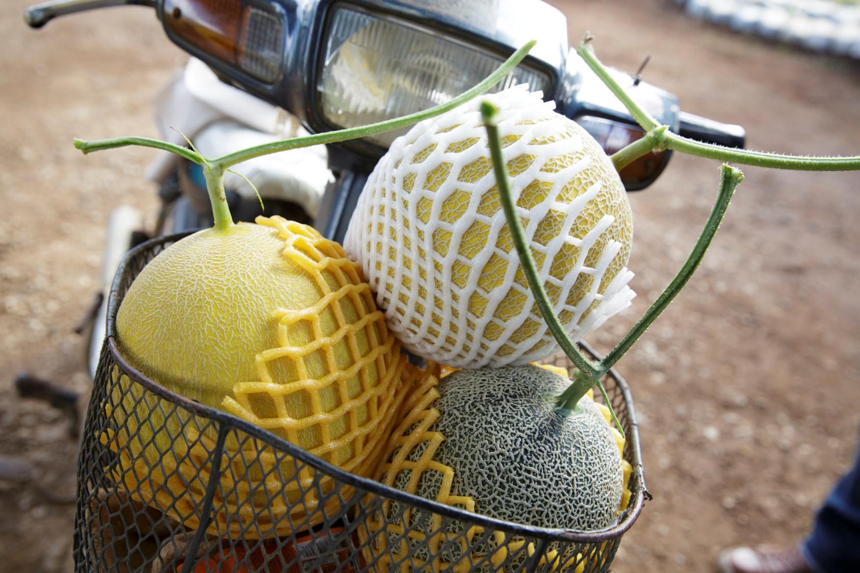 Asian Jewel Melon