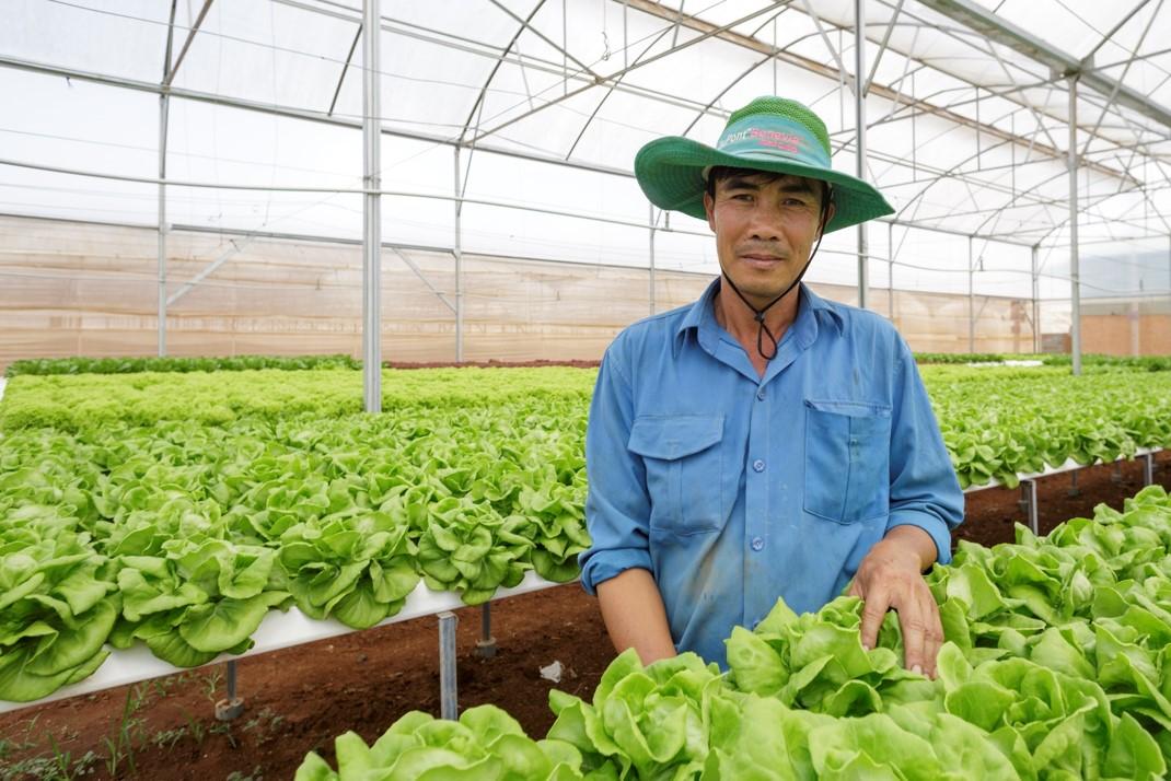 Innovative vegetable varieties help to improve food safety