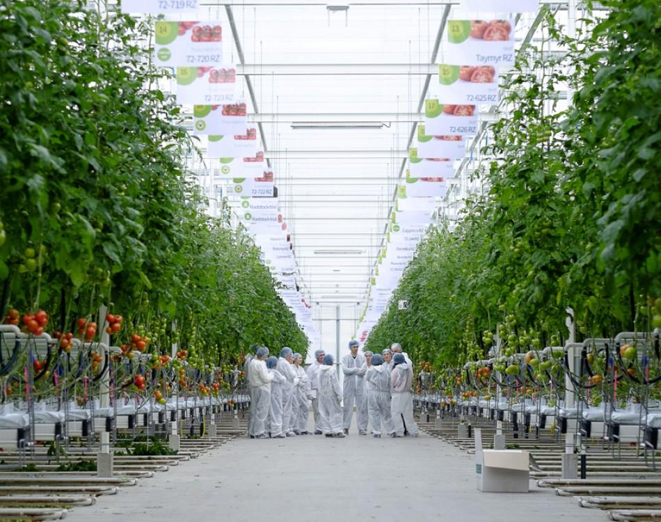 Trial Center Tomato Kwintsheul is ready for new season