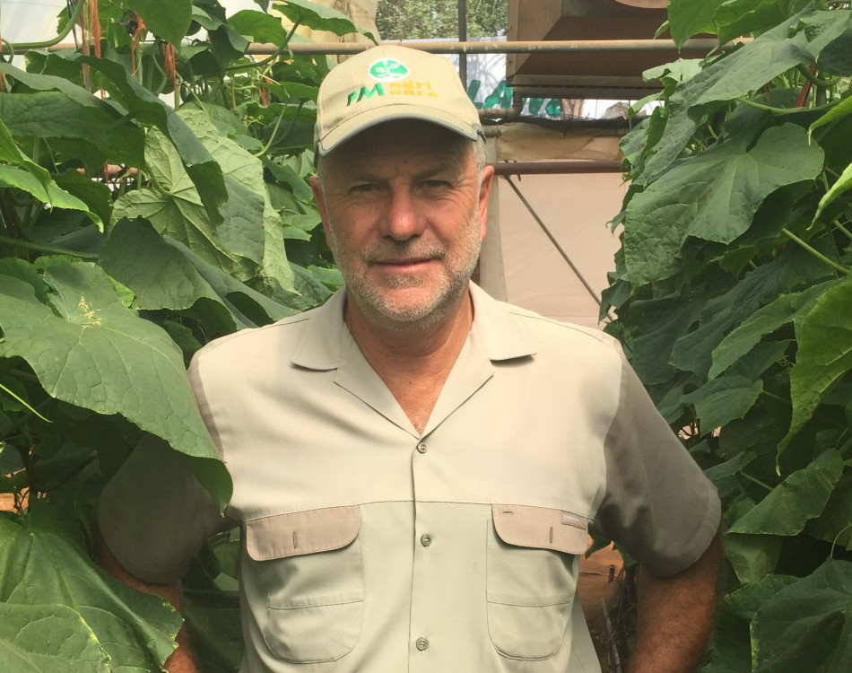 South Africa grower in cucumber crop