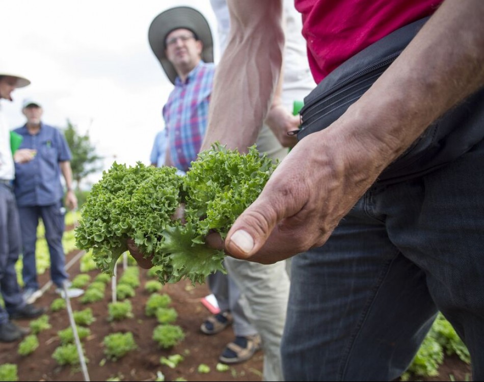 How vegetable breeding helps to reduce food waste and loss