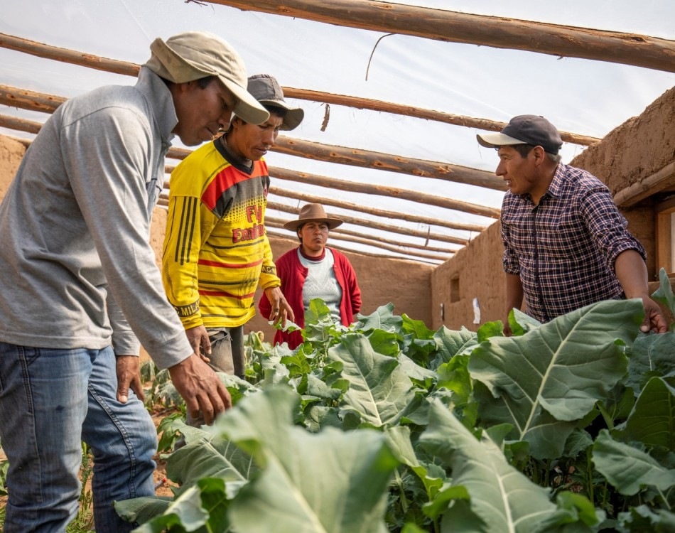 Kusimayo Growers Peru