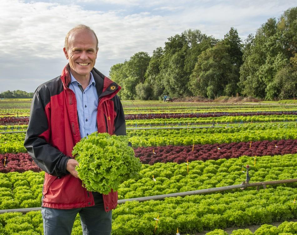 Rijk Zwaan lettuce varieties have resistance against new downy mildew race